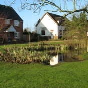 Taken in February 2008 of one of Palgraves many ponds, this one is at the entrance to Burlington Close.