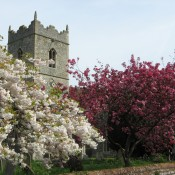 Taken in April 2007 shows blossom on trees in the churchyard of St Peters Church